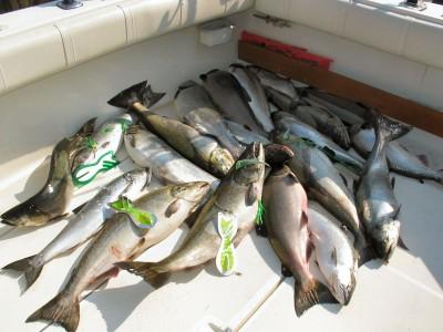August Fishing